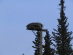Incredible Bird Next - Banff Walking Trail