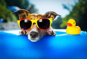 bigstock-Beach-Dog-48764102